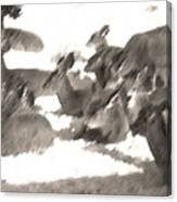 Deer Bedding Down Canvas Print