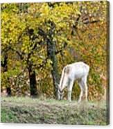 Deer Boy Canvas Print