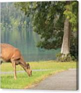 Deer By Crescent Lake Canvas Print