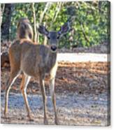 Deer Doe - 1 Canvas Print