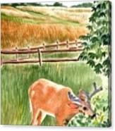 Deer Eating Leaves Canvas Print