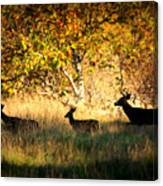 Deer Family In Sycamore Park Canvas Print