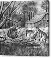 Deer Field  Canvas Print