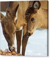 Deer Friends Canvas Print