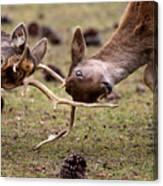 Deer Games Canvas Print