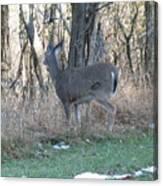 Deer Going Canvas Print