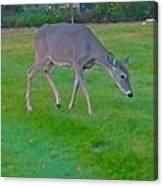 Deer Grazing In City Field Canvas Print