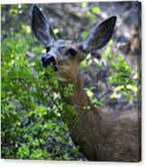 Deer Having Lunch Canvas Print