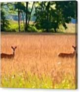 Deer In A Field Canvas Print