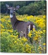 Deer In A Field Of Yellow Flowers Canvas Print