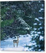 Deer In A Snowy Glade Canvas Print