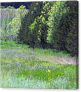 Deer In Clearing Canvas Print