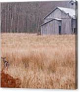 Deer In Hiding Canvas Print