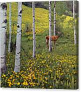 Deer In Spring Canvas Print
