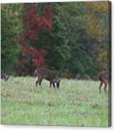 Deer In The Fall Canvas Print