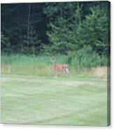 Deer In The Midst Canvas Print