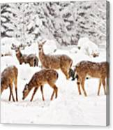Deer In The Snow 2 Canvas Print