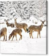 Deer In The Snow Canvas Print