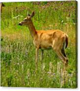 Deer In The Wild Canvas Print