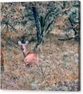 Deer In Woods Canvas Print