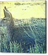 Deer Lying Down Canvas Print