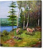 Deer Meadow Canvas Print