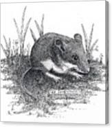 Deer Mouse Canvas Print
