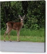 Deer On Road Canvas Print