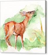 Deer Painting In Watercolor Canvas Print