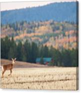 Deer Poses In The Fall Canvas Print