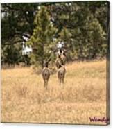 Deer Tails Canvas Print