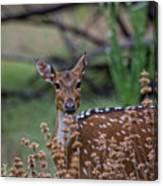 Deer V5 Canvas Print