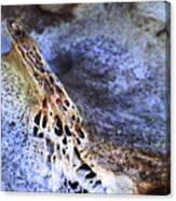 Deer Virtabrate Canvas Print