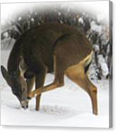 Deer With An Itch Canvas Print