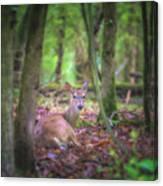 Deer1 Canvas Print