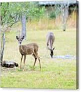 Deer18 Canvas Print