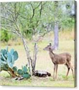 Deer19 Canvas Print