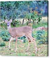 Deer42 Canvas Print