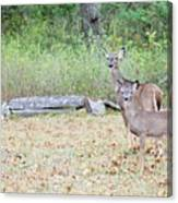 Deer47 Canvas Print