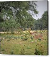 Deer48 Canvas Print