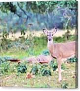 Deer50 Canvas Print
