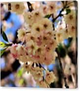 Delicate Blossoms Canvas Print