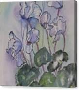 Delicate Cyclamen Canvas Print
