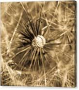 Delicate Dandelion Canvas Print