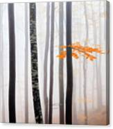 Delicate Forest Canvas Print