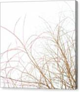 Delicate January Tree Branches Canvas Print