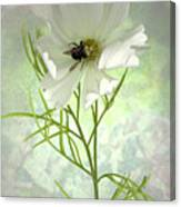 Delicate Nature of Both Canvas Print