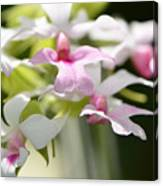 Delicate Orchids By Sharon Cummings Canvas Print