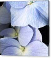 Delicate Petals Canvas Print