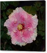 Delicate Pink Flower Canvas Print